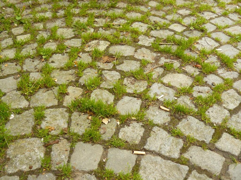 kostka granitowa trawa w fugach, zarośnięte fugi w kostce granitowej